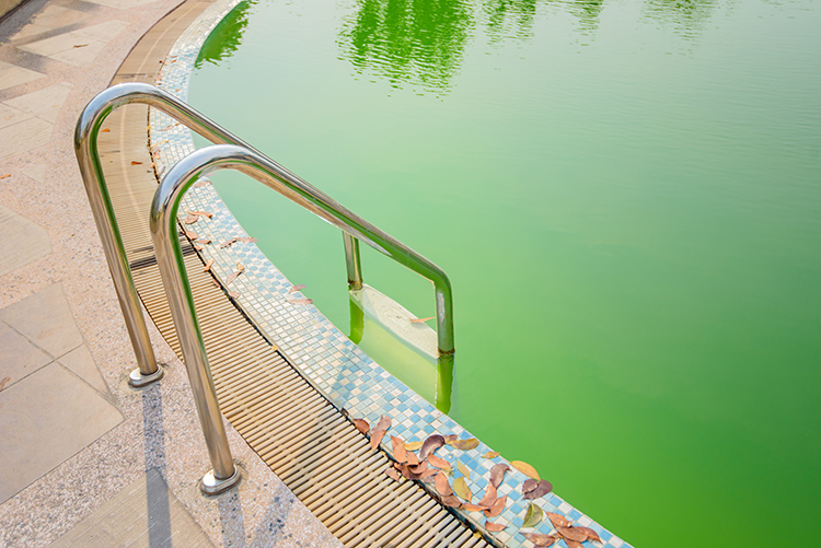 Phosphates-in-Pool-Water_green-pool